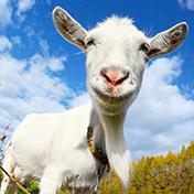Crazy Goat FREE иконка