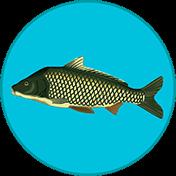True Fishing иконка