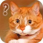 Ask Cat Speak Simulator иконка
