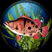 Fishing PRO иконка