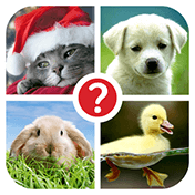 Guess the Word: 4 Pics 1 Word иконка