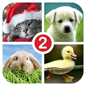 Guess the Word 2: 4 Pictures иконка