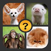 4 Pictures 1 Word иконка