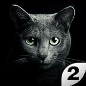 Найди кота 2: Бесплатно (Find A Cat 2: Free)
