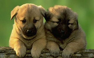 Puzzle: Puppies скриншот 1
