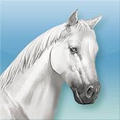 Horse иконка