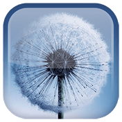 Dandelion Live Wallpaper иконка