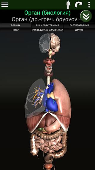 Organs 3D: Anatomy скриншот 1