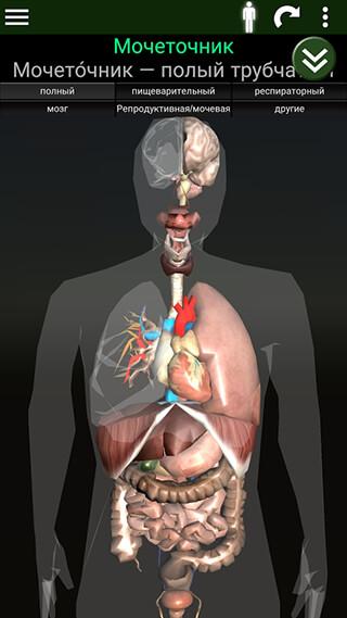 Organs 3D: Anatomy скриншот 4