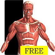 Visual Anatomy Free иконка