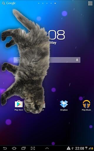 Cat Walks in Phone Cute Joke скриншот 4