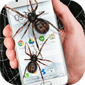 Spider in Phone Funny Joke иконка